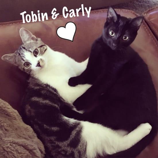 tobin-carly