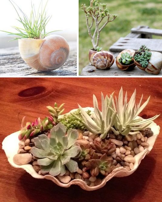 24 creative garden container ideas use shells for small plants 22