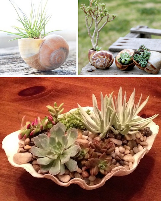 Use shells for small plants