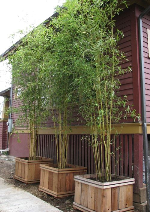 13 attractive ways to add privacy to your yard deck for Tall planters for privacy