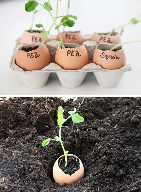 How to start seedlings -- Easy DIY gardening tips and ideas for beginners and beyond! Tips and tricks for your flower or vegetable garden, or for your front or backyard landscaping design. A few garden projects and ideas you can do for cheap! Listotic.com