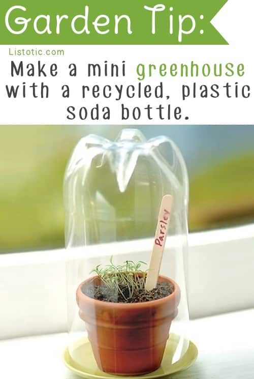 Mini Greenhouse Idea that's cheap and easy -- Easy DIY gardening tips and ideas for beginners and beyond! Tips and tricks for your flower or vegetable garden, or for your front or backyard landscaping design. A few garden projects and ideas you can do for cheap! Listotic.com