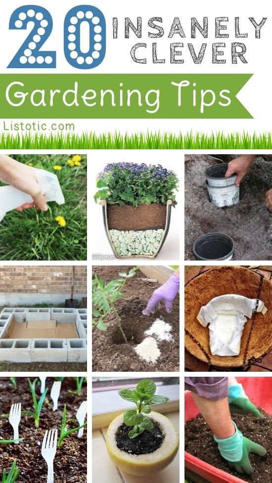 Easy DIY gardening tips and ideas for beginners and beyond! Tips and tricks for your flower or vegetable garden, or for your front or backyard landscaping design. A few garden projects and ideas you can do for cheap! Listotic.com
