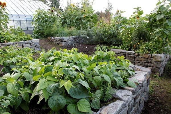stone walls holding raised garden bed vegetable garden