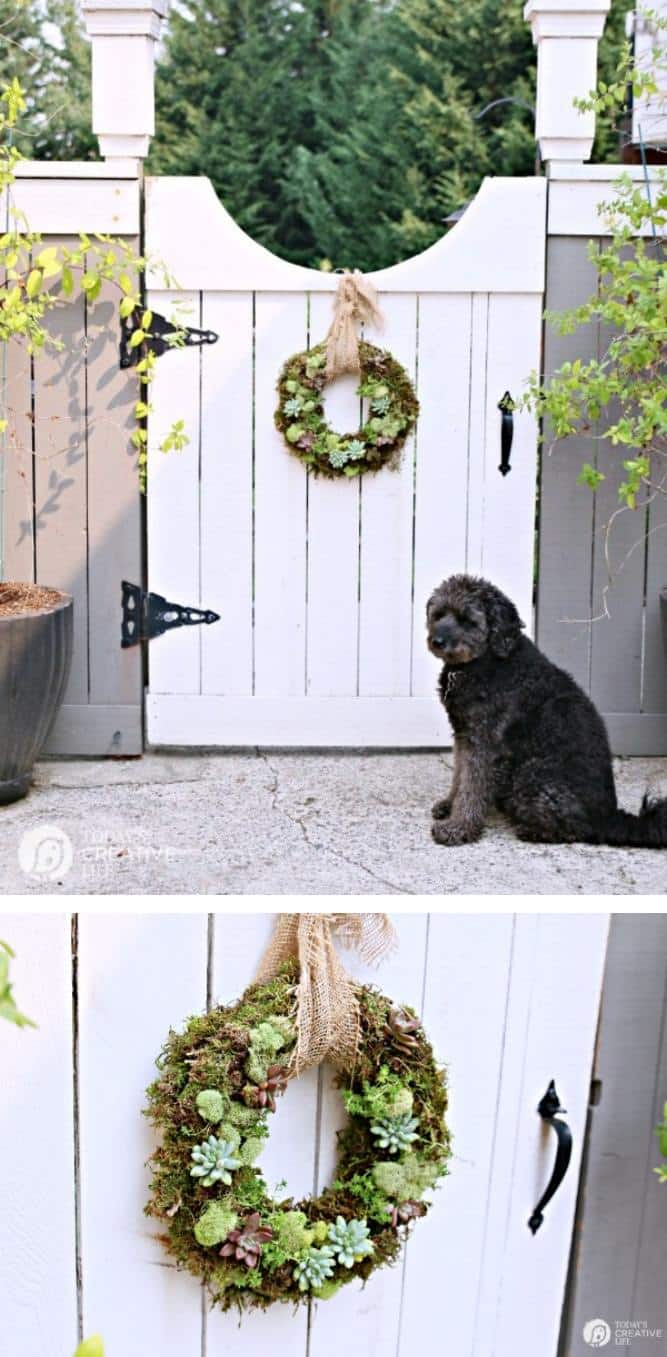 DIY Garden idea using succulents planted in to the frame of a wreath and hung with burlap on a garden gate door to welcome guests to a home or backyard space.