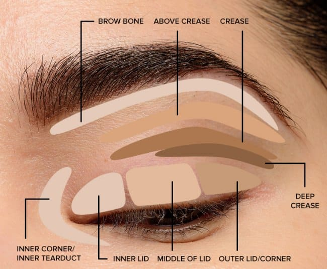 Step by step eyeshadow tutorial for beginners.