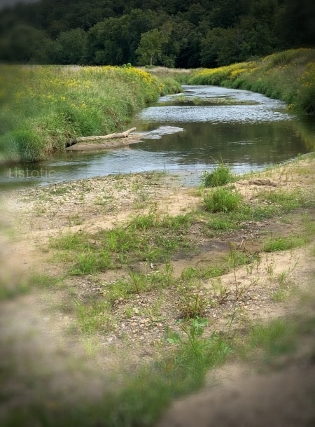 : Sand and rock beach leading to a winding creek that empties into the river and green grassy creek bank with yellow flowers growing on a summer day.