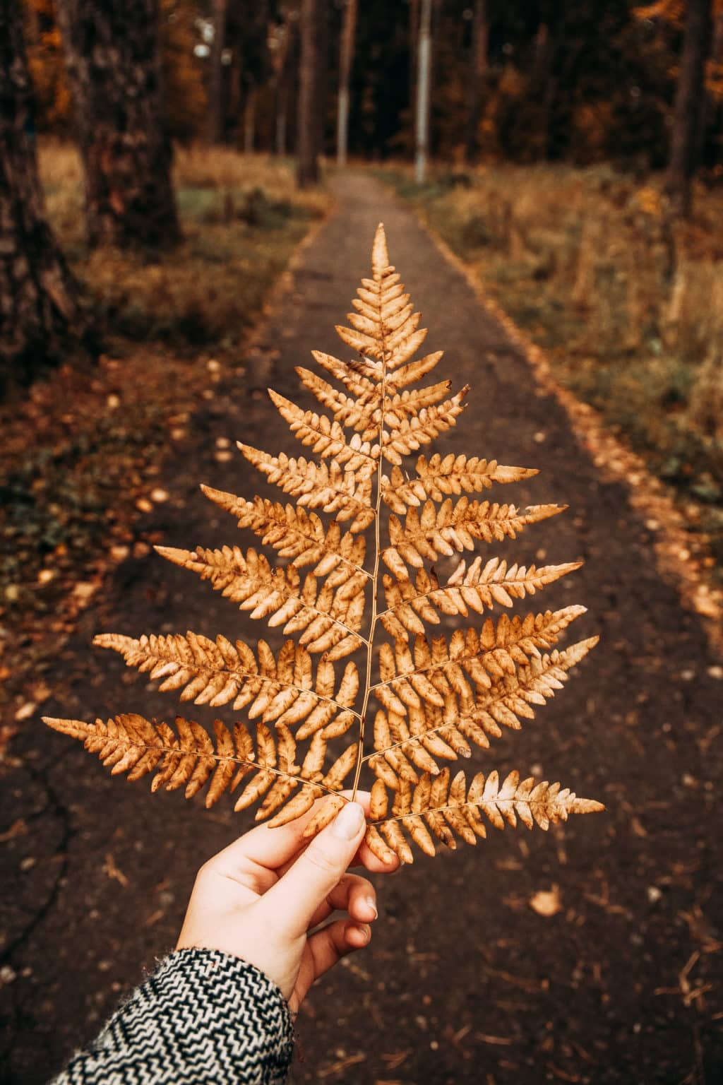 Hand holding a large fern leaf in front of a fall path lined with fallen tree leaves in autumn.