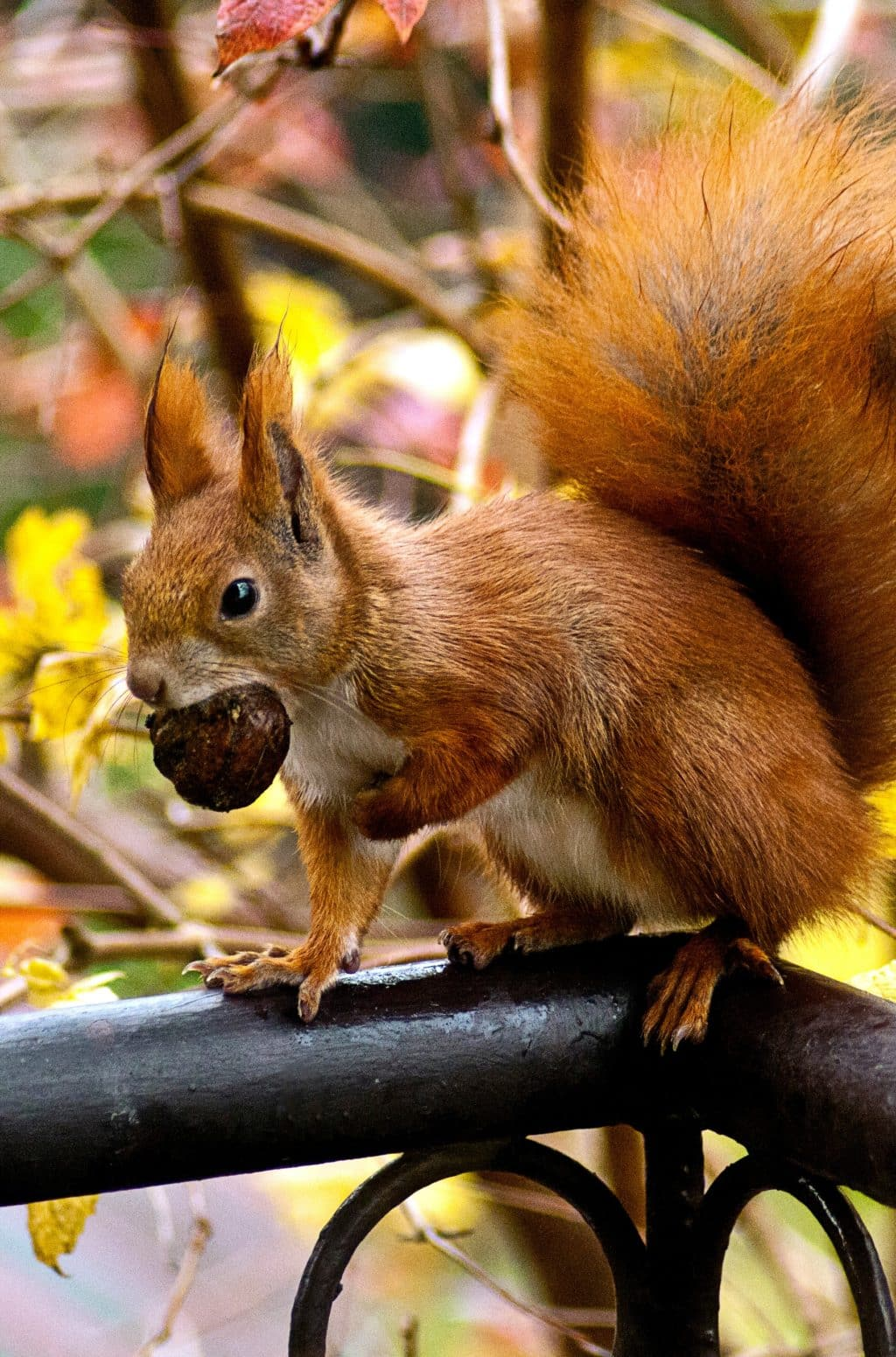 Squirrel holding a big walnut fall is here with 2020 Hashtags