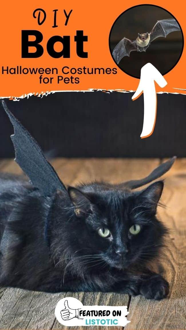 Eine schwarze Katze in einem Fledermausflügel-Haustierkostüm gekleidet.