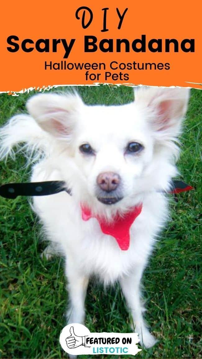 Ein flauschiger weißer Hund, der ein gruseliges Bandana Last-Minute-Hundekostüm trägt.