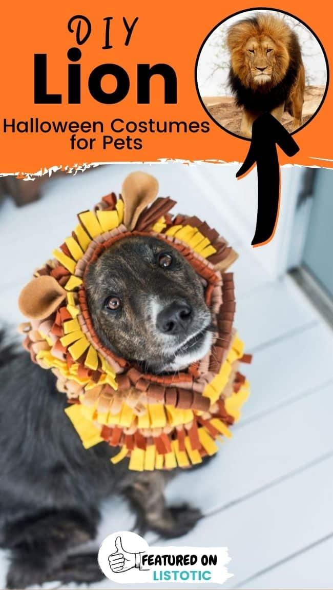 Ein großer Hund, der eine DIY-Tier-Halloween-Kostüme der Löwenmähne ohne Nähen trägt.