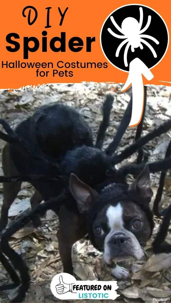 Ein Hund, der eine Spinne DIY Tier Halloween Kostüme für Haustiere trägt.