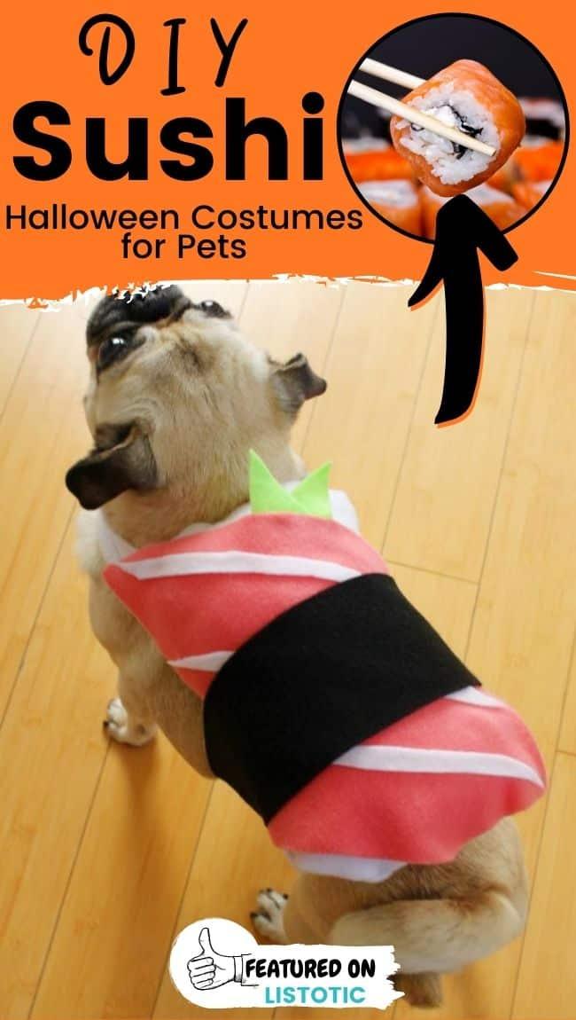 Ein Mops, der ein DIY Sushi Tier Halloween Kostüme trägt.