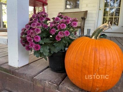 mum flower and pumpkin
